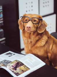 Image of dog wearing glasses Creative Copywriting Pet Business Copywriting Services